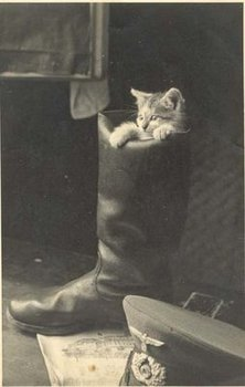 Cat on boot.jpg