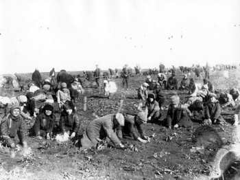 Children are digging up frozen potatoes in the field of a collective farm.1933.jpg