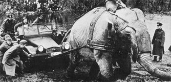 Circus elephant helps soldiers of Wehrmacht to save their car.jpg
