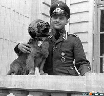 Nazi Dog.jpg