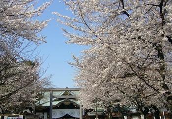Sakura cherry blossoms in Yasukuni Shrine.jpg