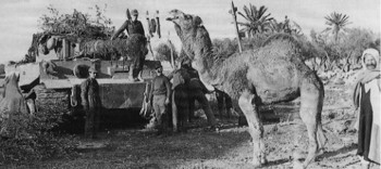Schwere Panzerabteilung 501 & camel.jpg