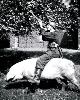 The-Wehrmacht-Pig.jpg