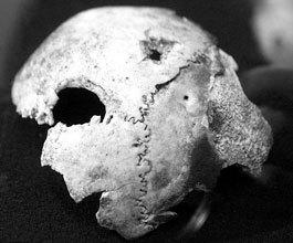 skull_hitler.jpg